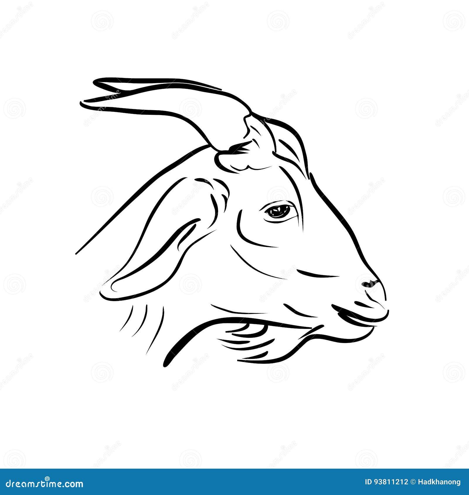 山羊头线艺术在白色的