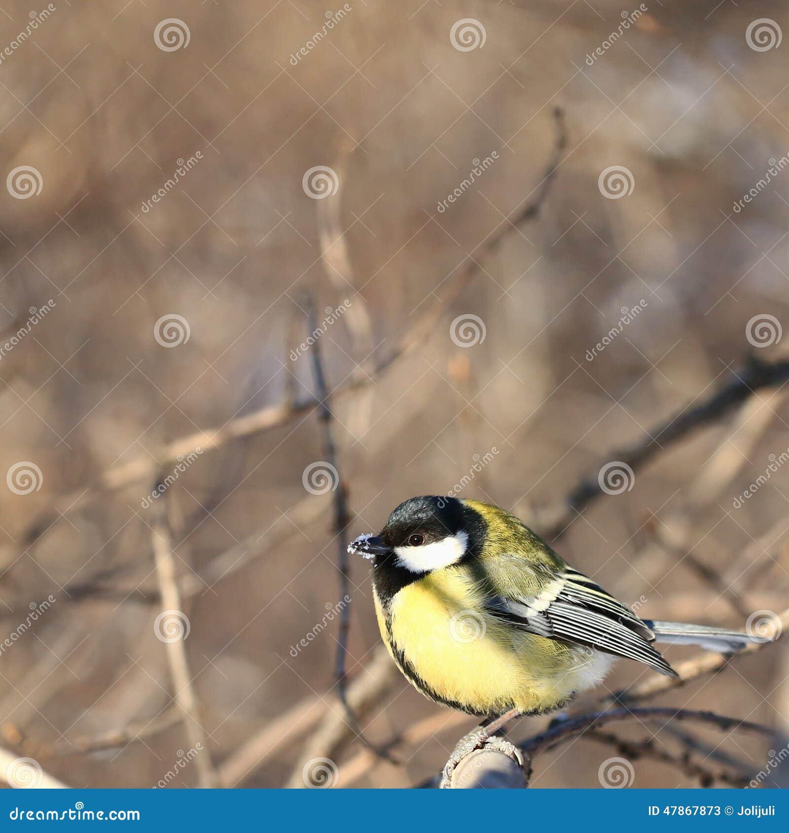 夜莺《山雀的歌声》环境描写图片