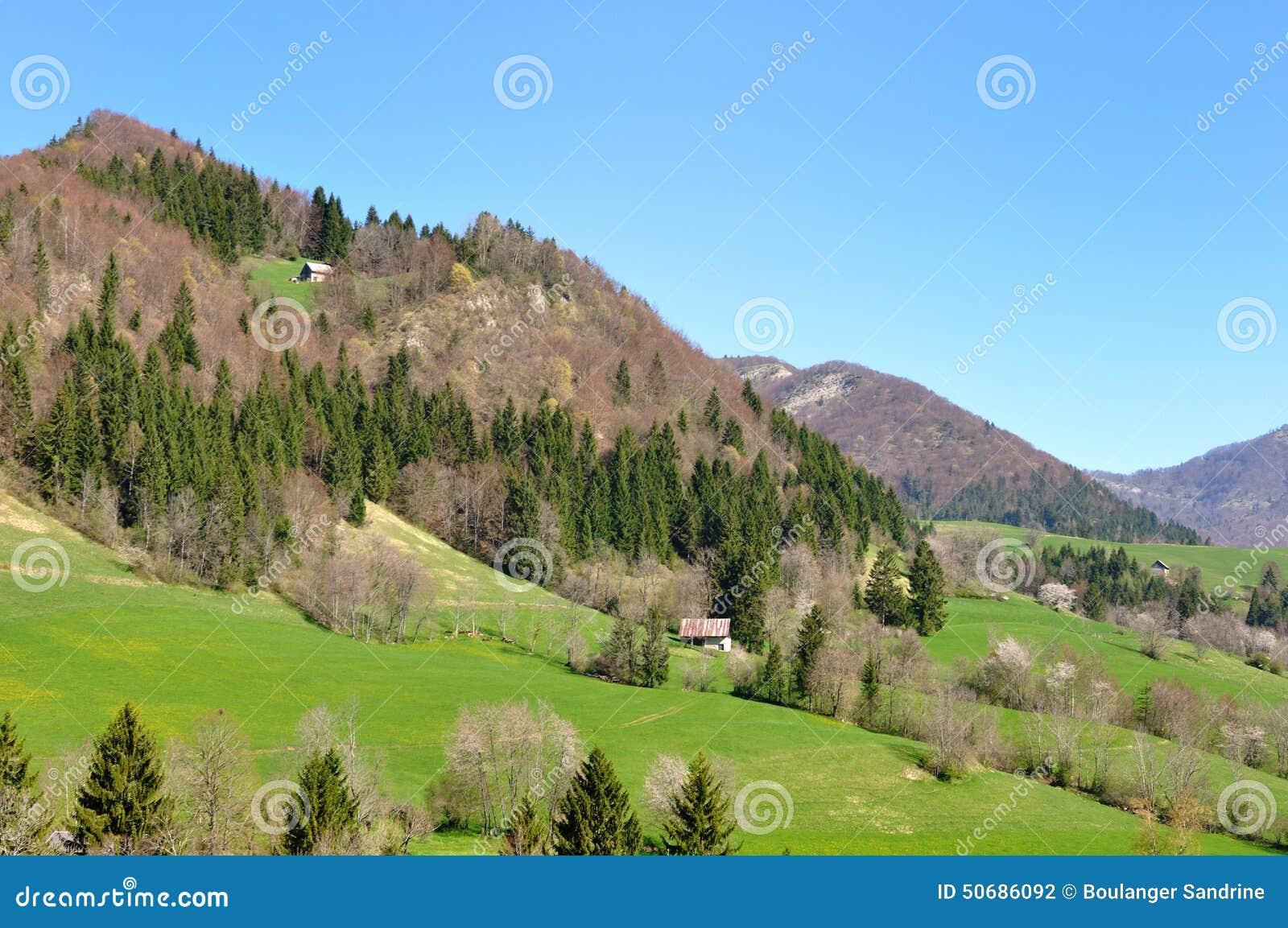 Download 山绿叶环境美化 库存照片. 图片 包括有 乡下, 淡黄绿, 草甸, 小山, 结构树, 风景, 横向, 森林 - 50686092