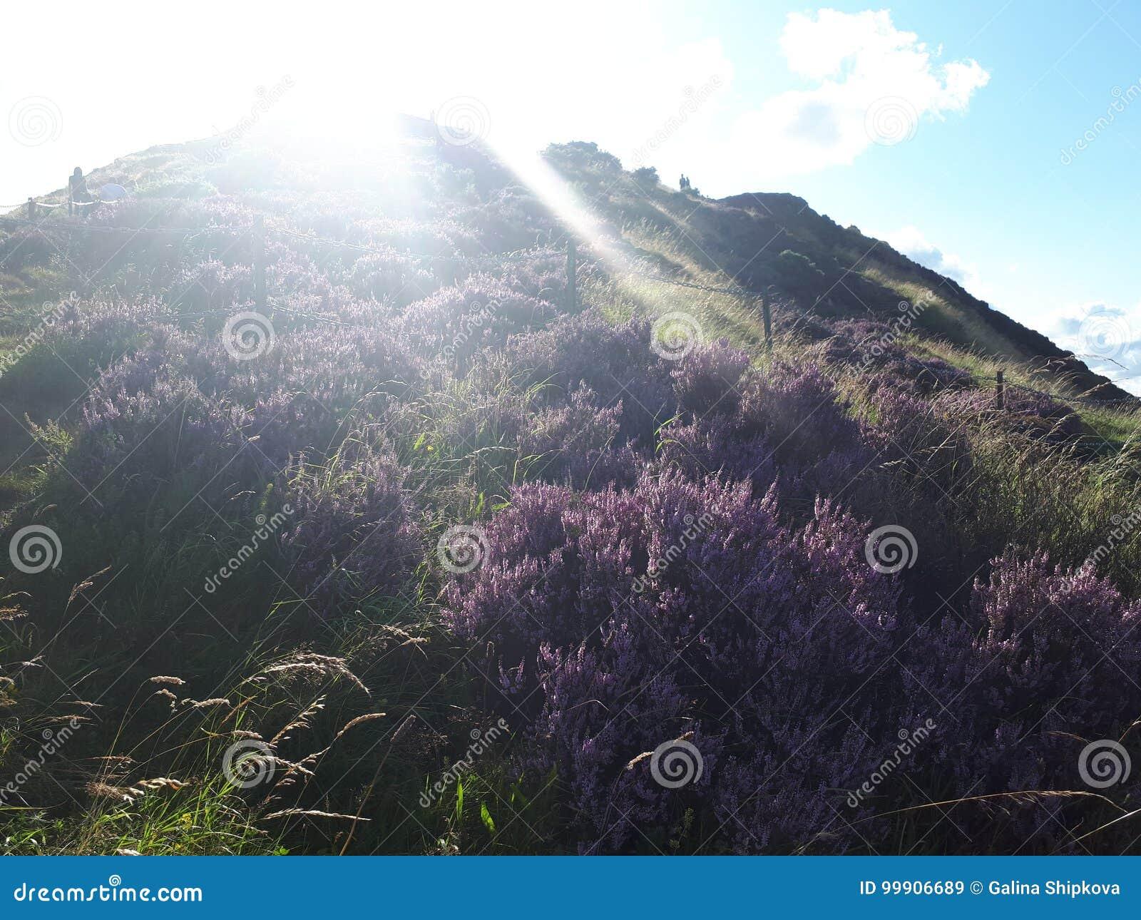 山 苏格兰 荒地 阳光 晒裂