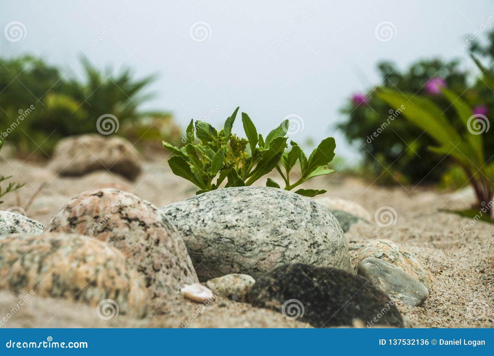 岩石新英格兰海滩足迹