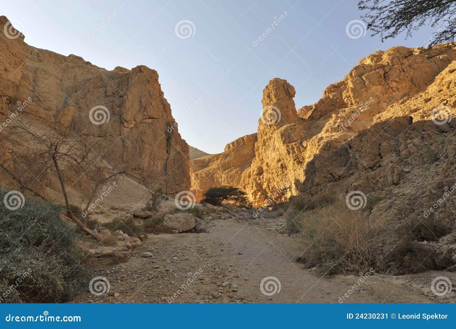 峡谷沙漠zohar judea的旱谷