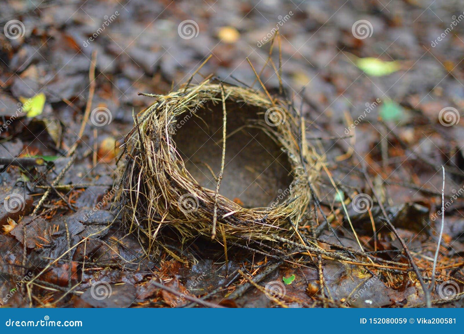 巢在graund说谎