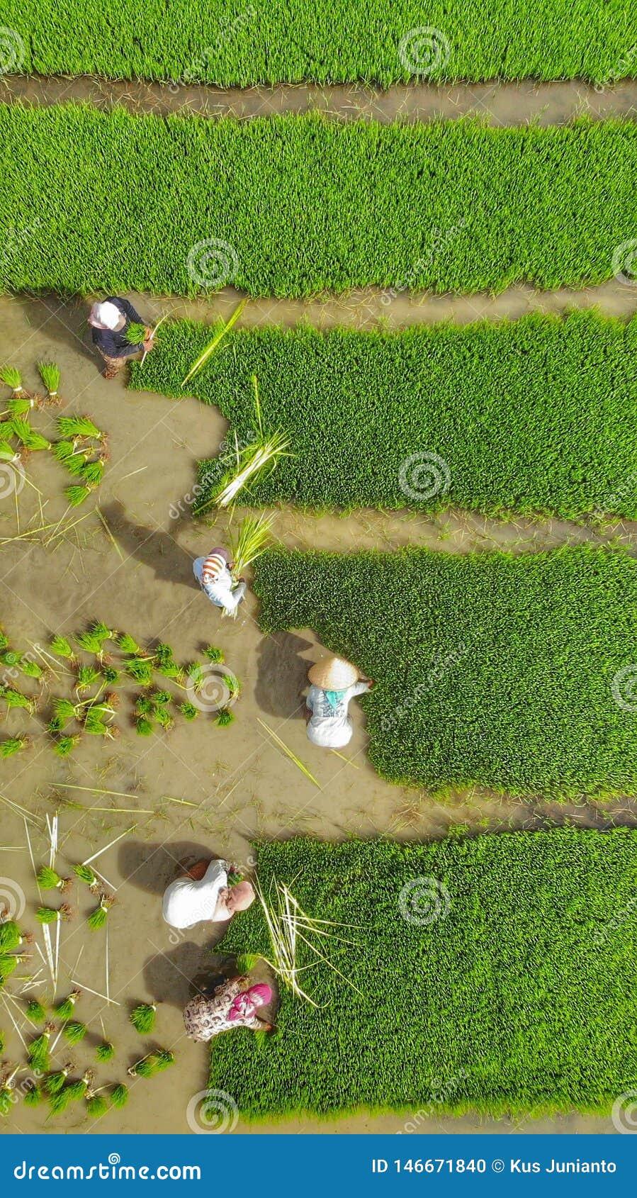 工作在农业领域的大角度观点的农夫