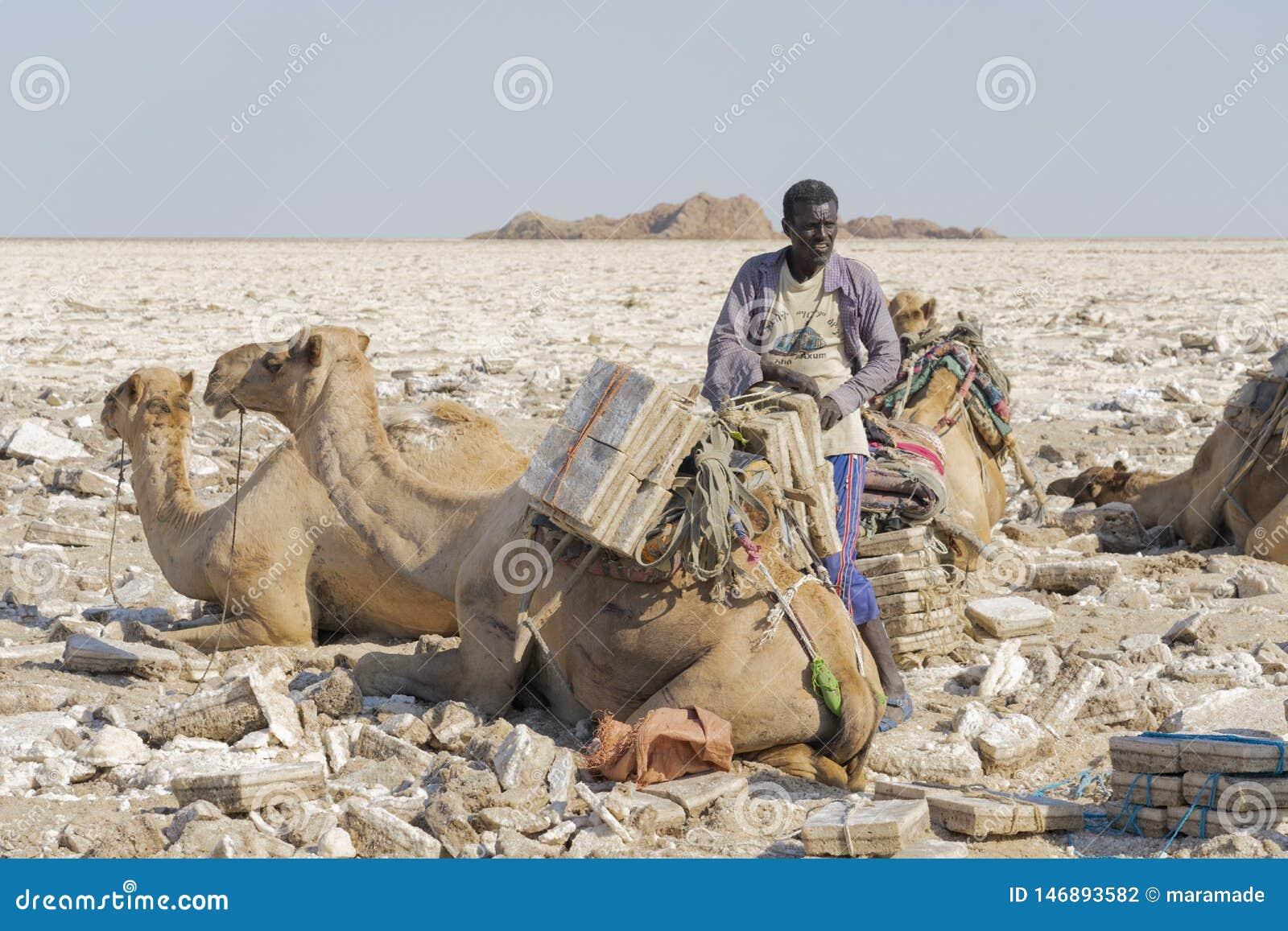 工作在Danakil消沉的盐平原的盐矿工在埃塞俄比亚