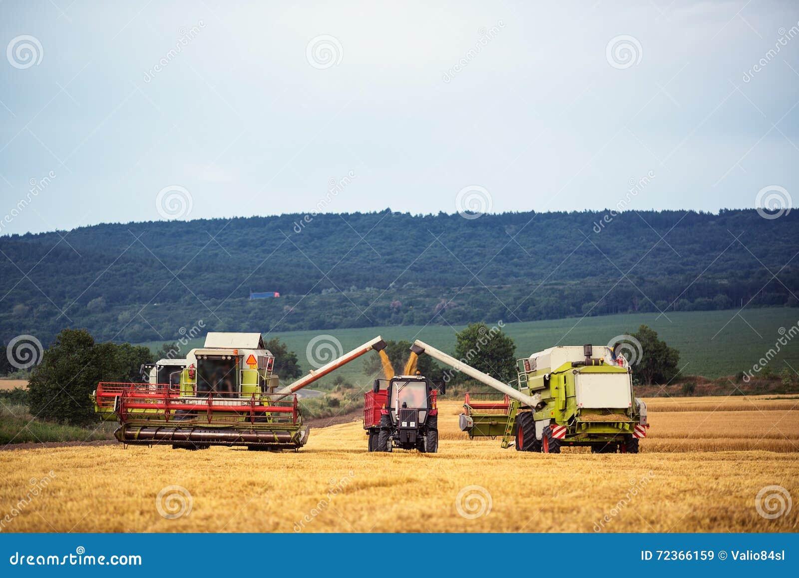工作收获在麦田的组合