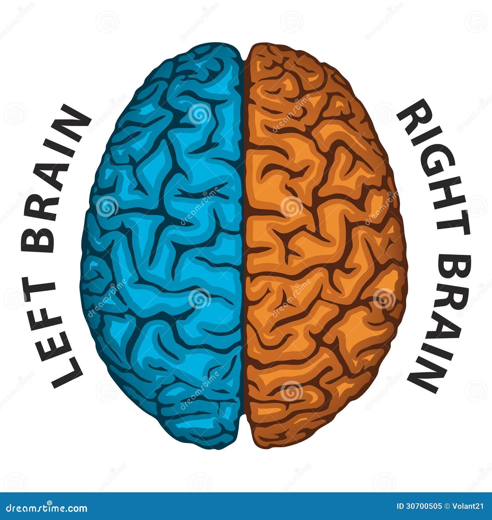 左脑��!$_左脑,右脑