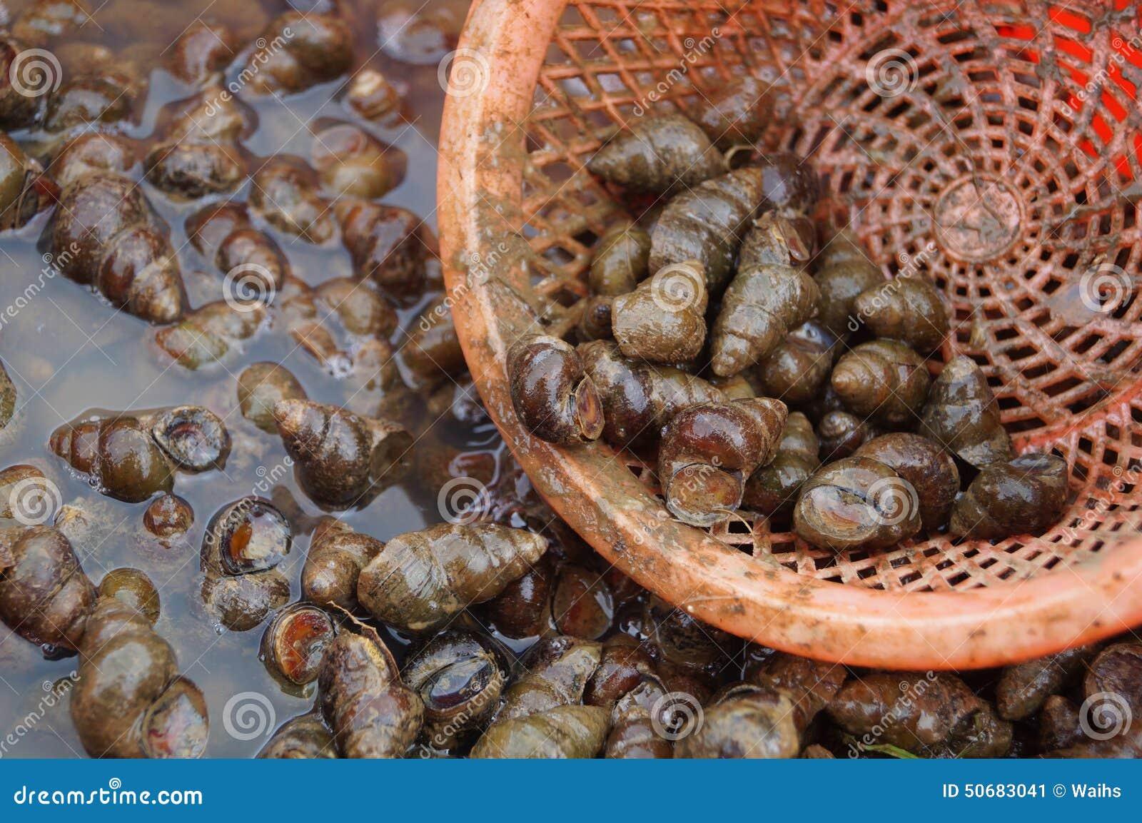 Download 巧克力精炼机 库存图片. 图片 包括有 茴香, 巧克力精炼机, 对象, 生活, 传记, 仍然, 食物, 海洋 - 50683041
