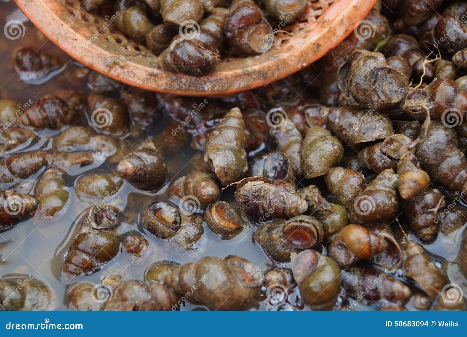 Download 巧克力精炼机 库存照片. 图片 包括有 海洋, 仍然, 茴香, 关闭, 海鲜, 巧克力精炼机, 销售额, 传记 - 50683094