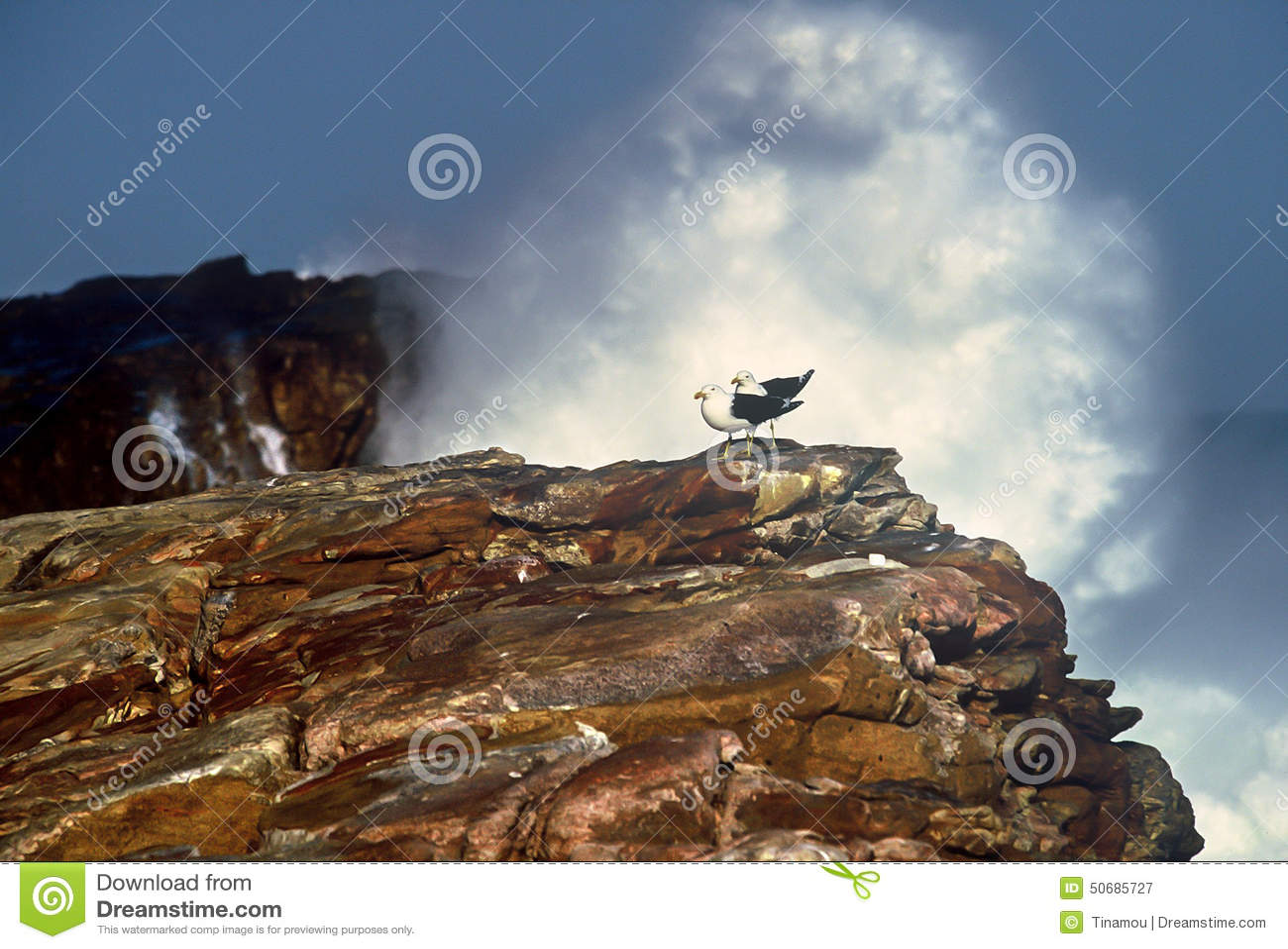 Download 巨大的波浪构筑的两只海角鸥 库存图片. 图片 包括有 次幂, 原野, 和平, 构成, 其它, 希望, 通配 - 50685727