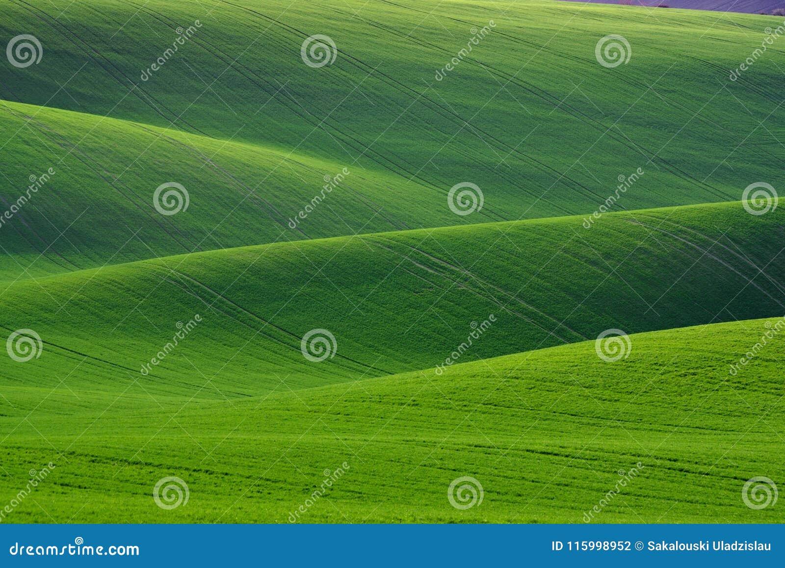 巨大自然绿色背景 滚动与麦田的春天青山 惊人的神仙Minimalistic春天风景与