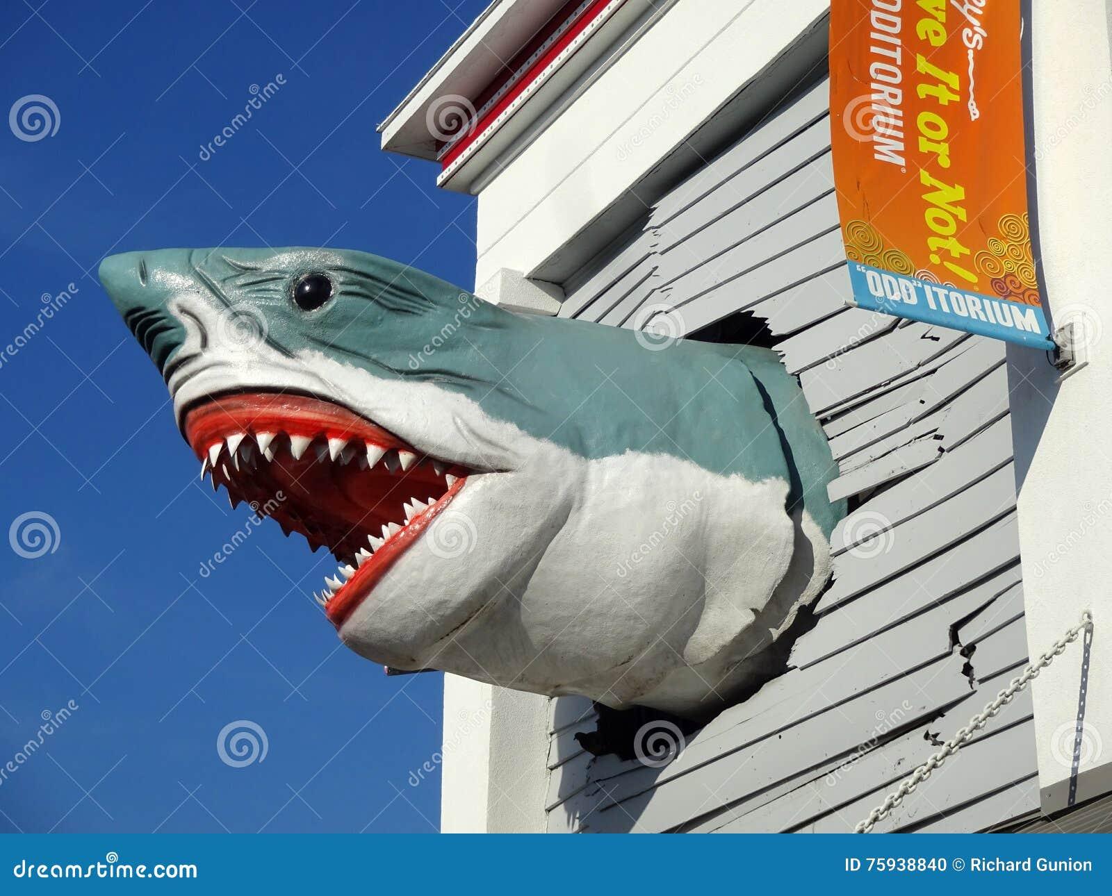 巨大鲨鱼白色