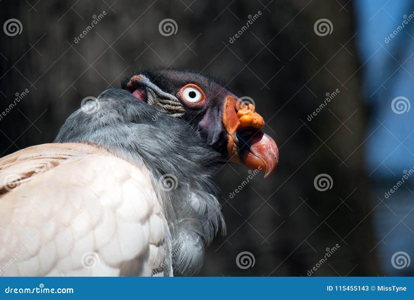 巨雕鸟的画象