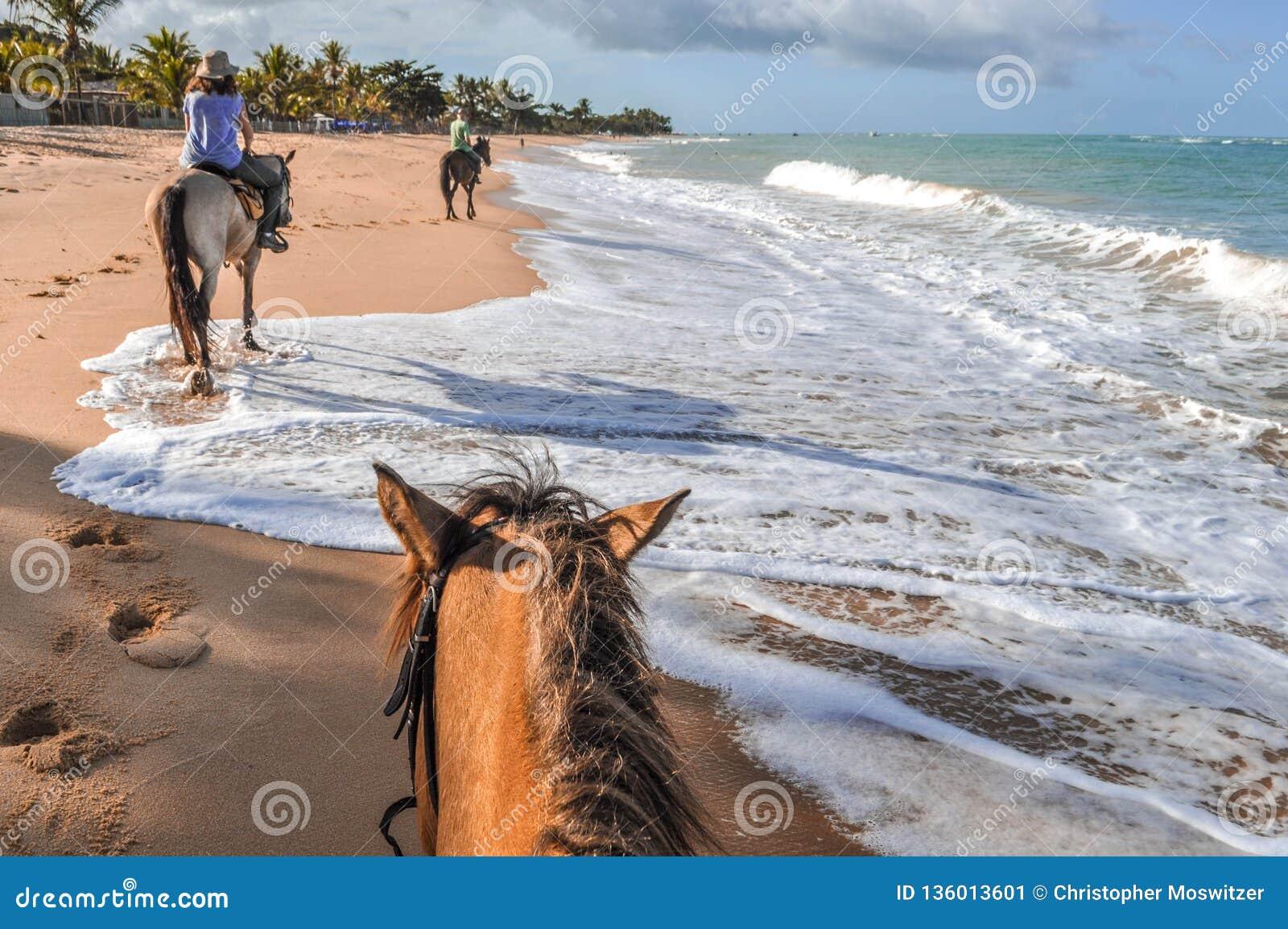 巴西-在海滩的马术在巴伊亚
