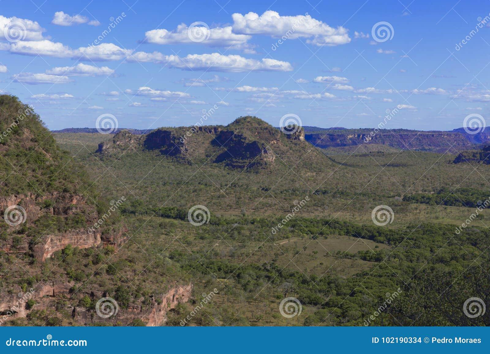 巴西cerrado的风景