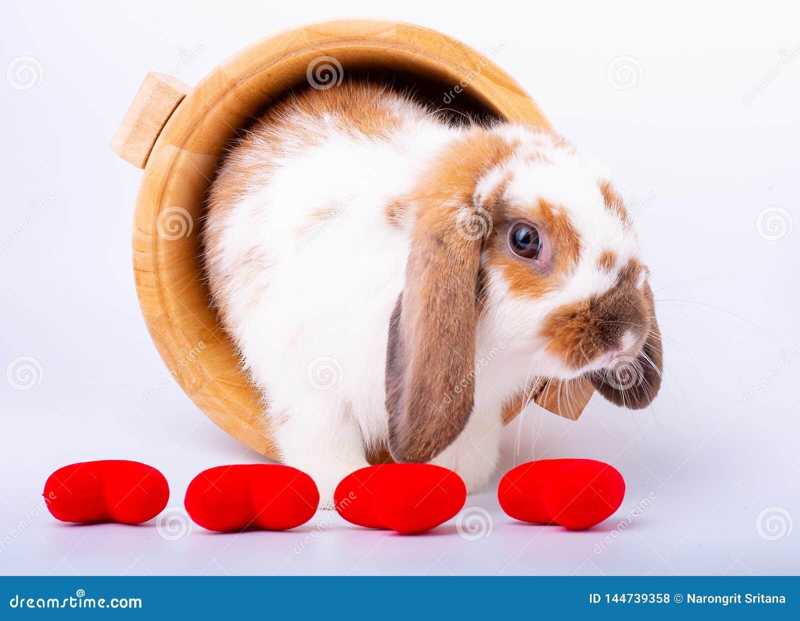 布朗和白色兔子逗留在木碗和在微型心脏后华伦泰题材的