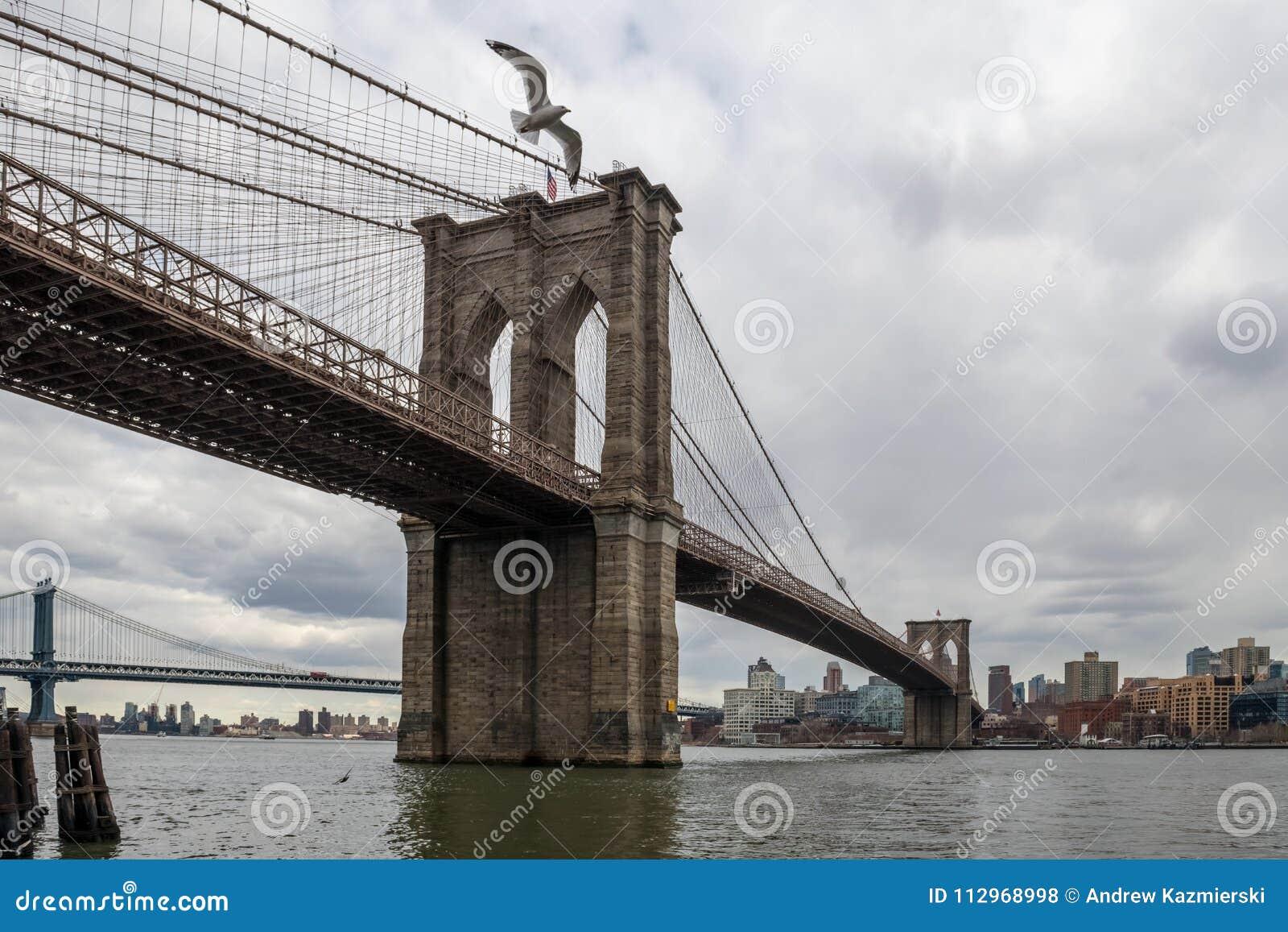 布鲁克林大桥和海鸥