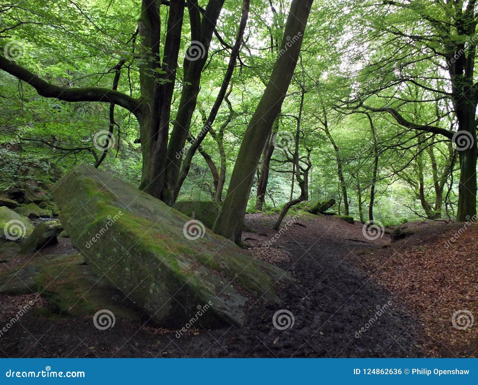带领下坡与大青苔的黑暗的森林道路盖了冰砾和鲜绿色的叶子在高森林地树
