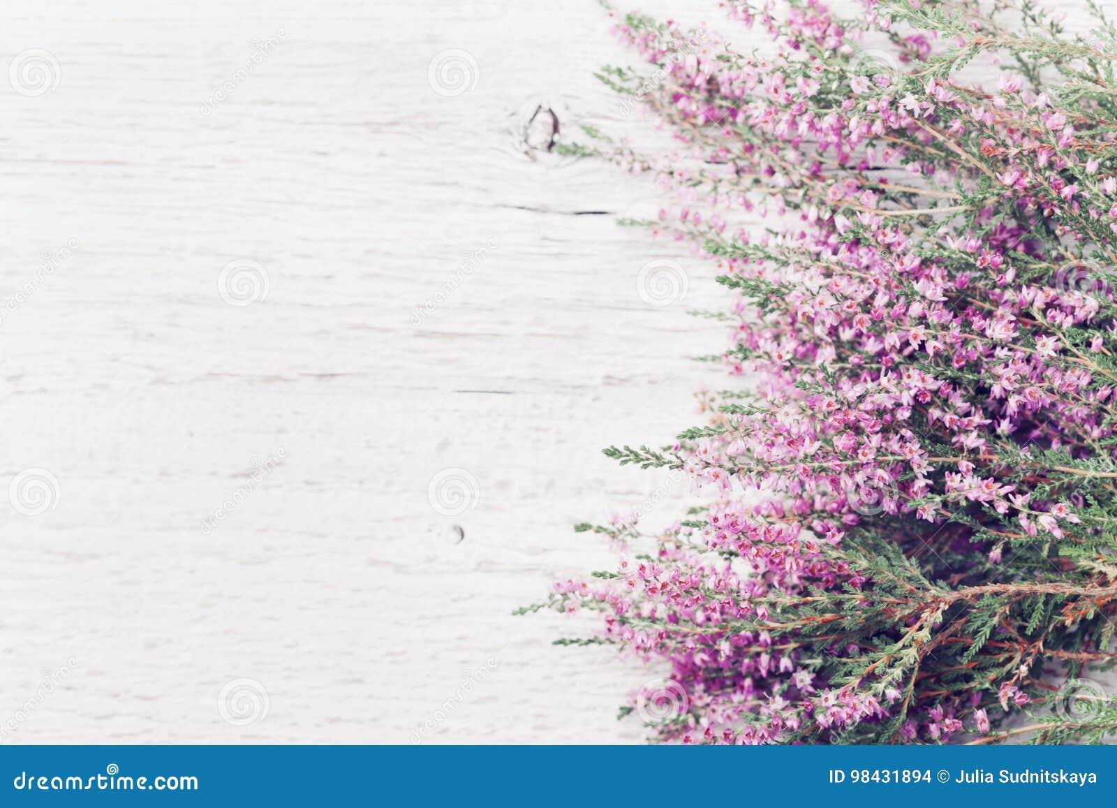 寻常桃红色石南花花边界的紧急电报,埃里卡,在白色土气桌顶上的视图的石楠 看板卡问候样式葡萄酒