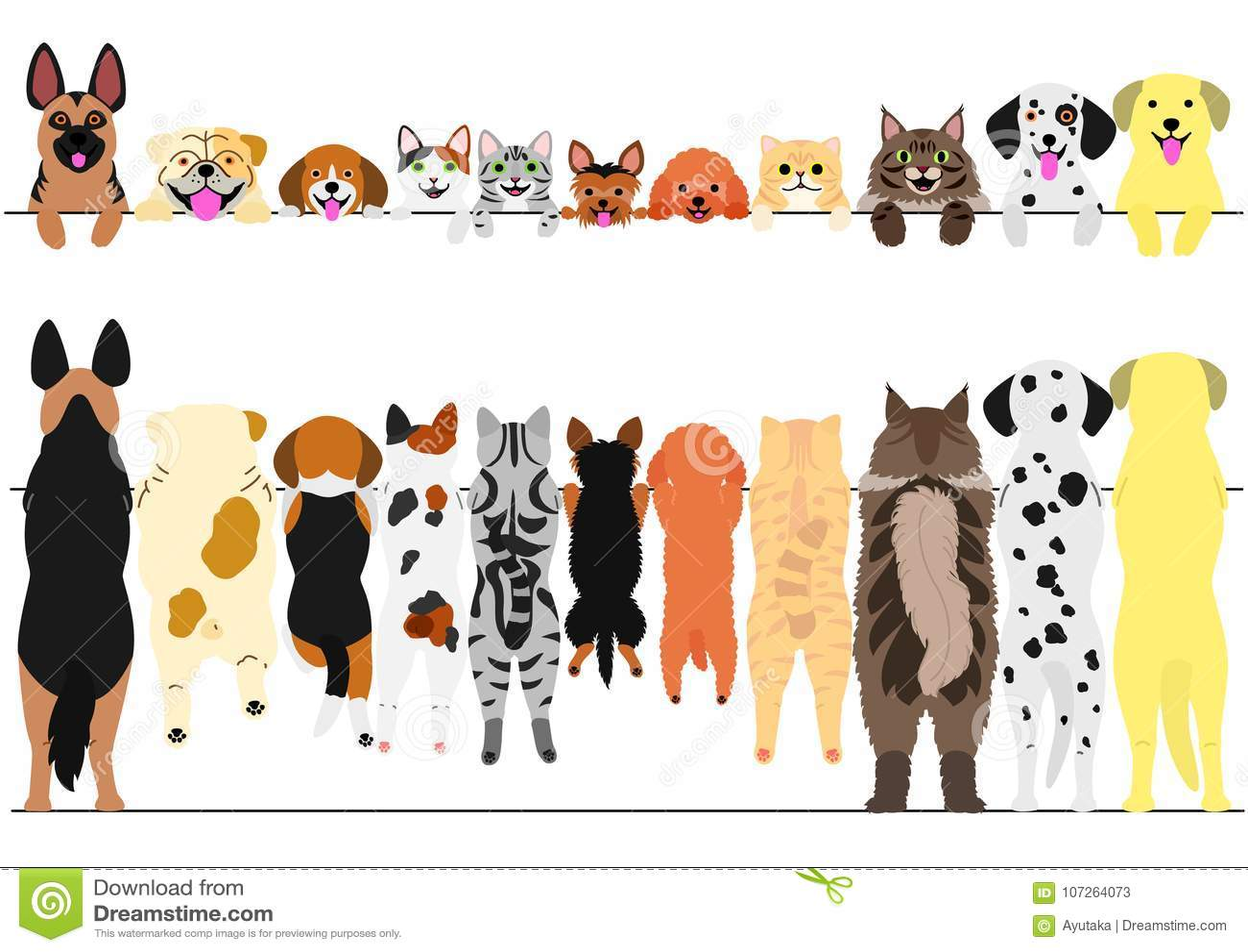 常设前面的狗和猫和后面边界集合