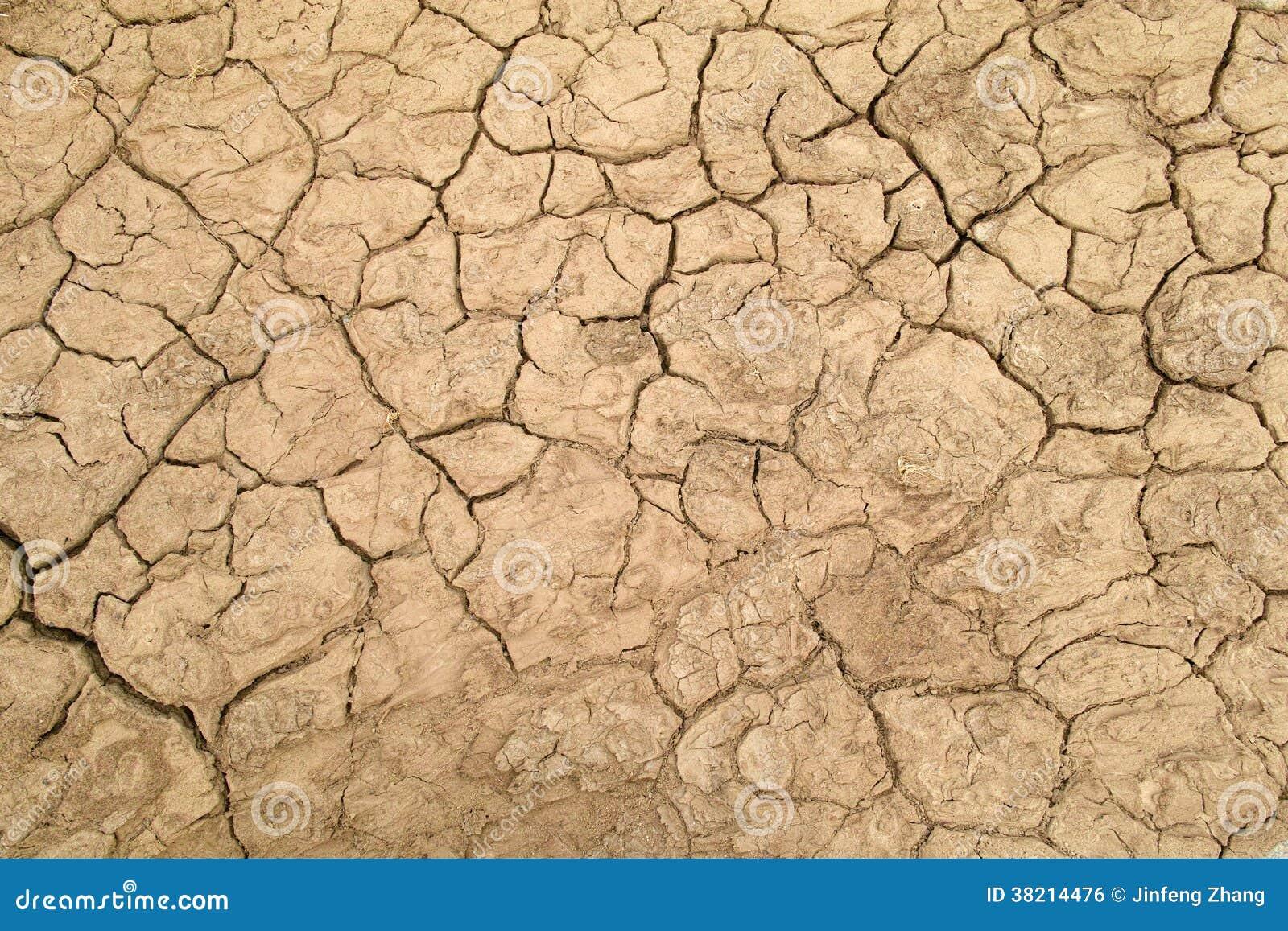 干旱的土壤