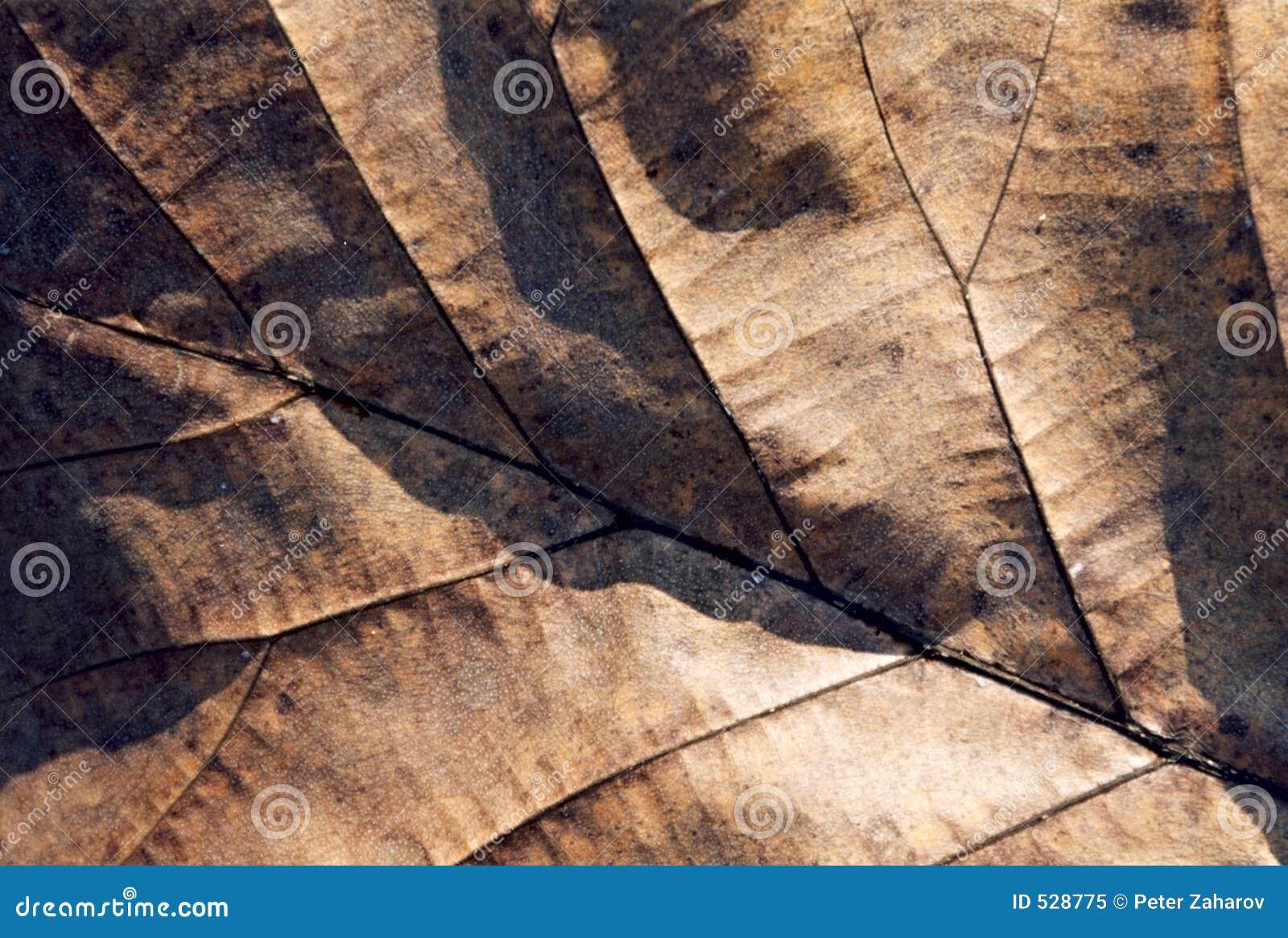 Download 干燥叶子 库存图片. 图片 包括有 严格, 肋骨, 模式, 装饰, 聚会所, 强壮, 宽频, 生叶, 温和派 - 528775