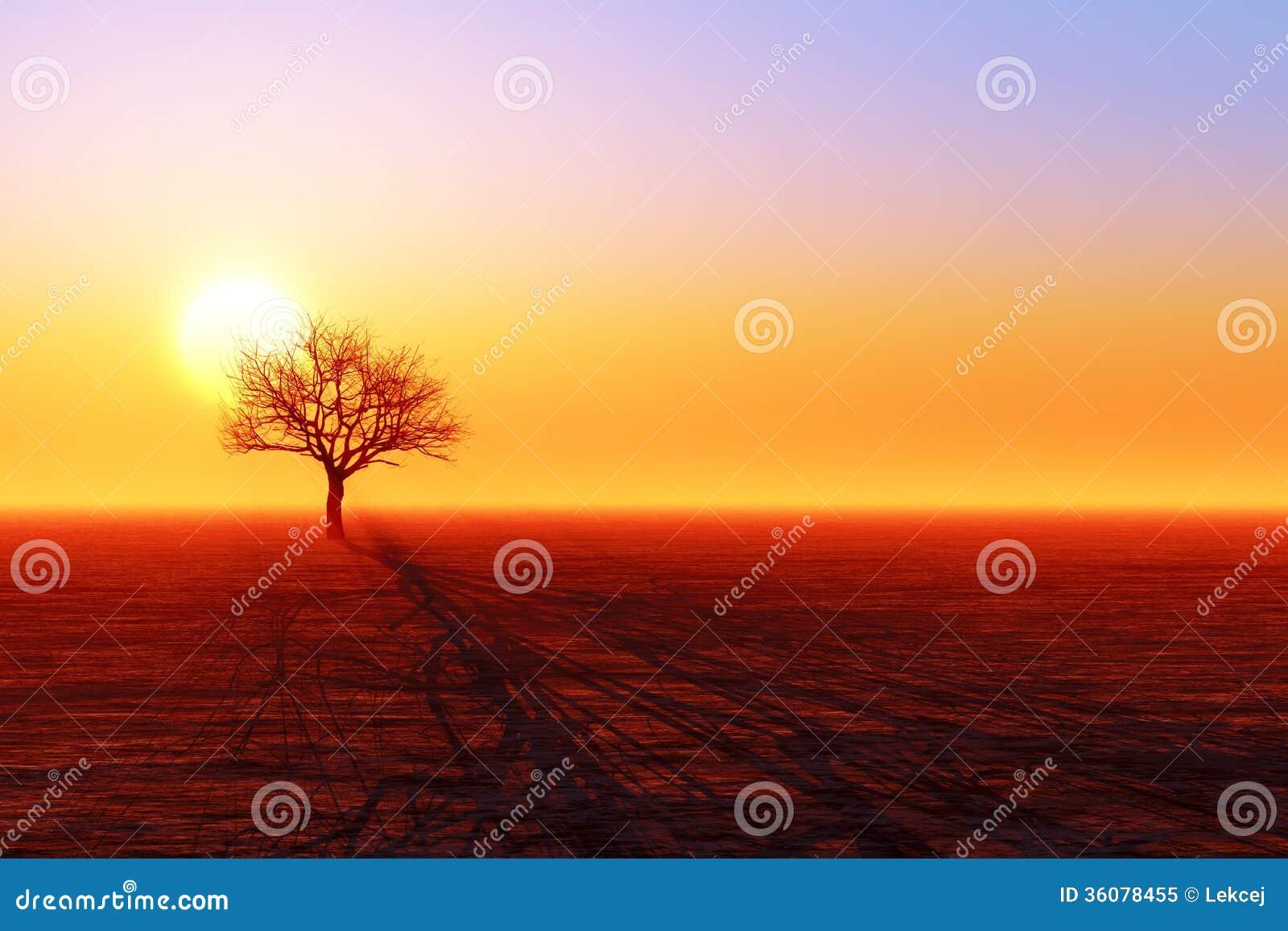 干燥树剪影
