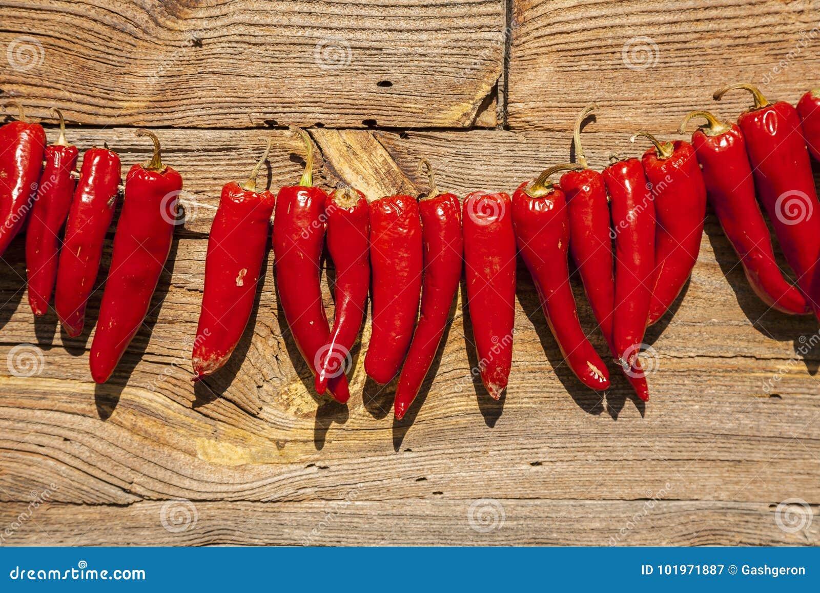 干燥胡椒在阳光下