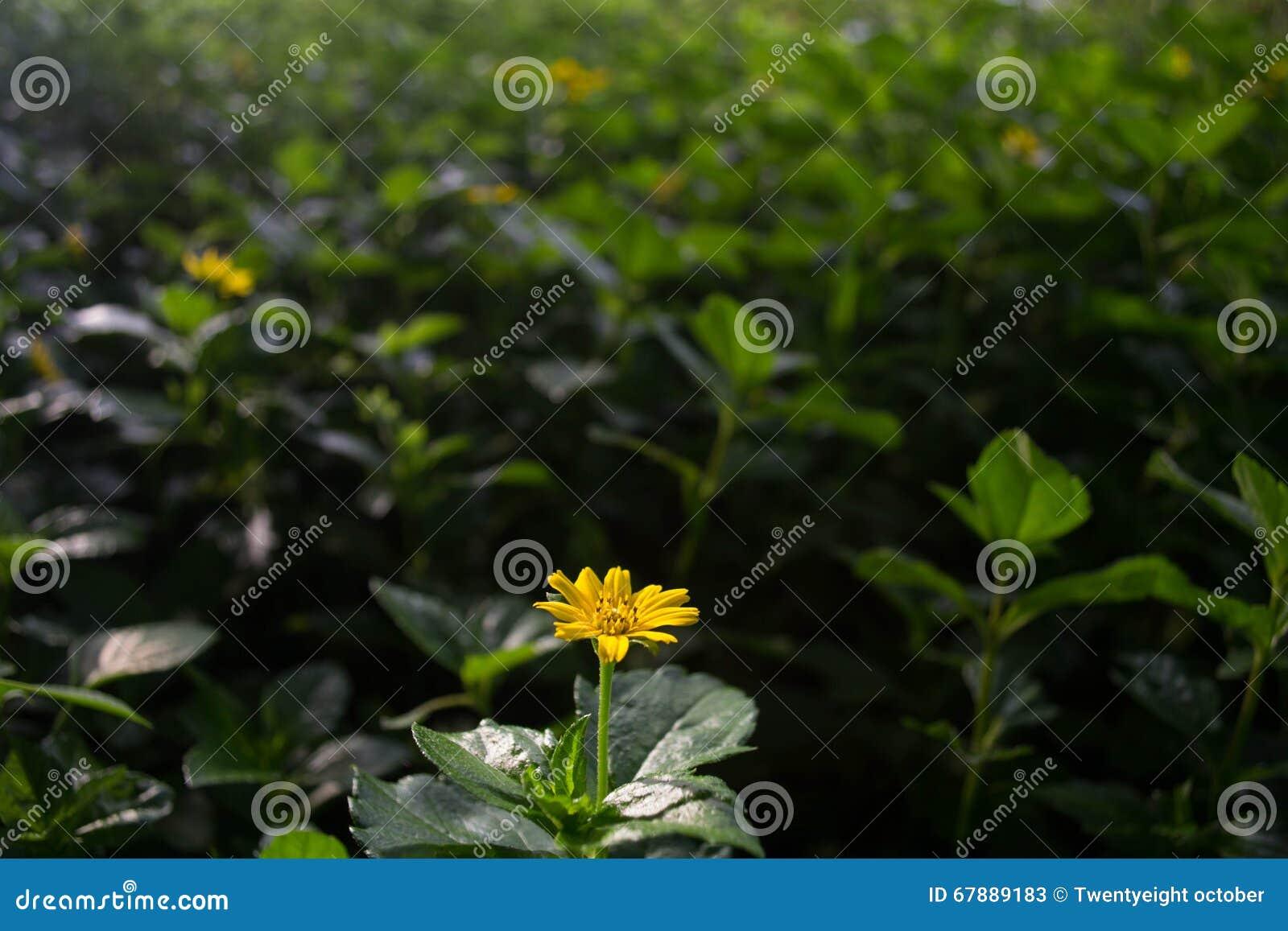 干燥花在用绿色叶子盖的草甸,芬芳