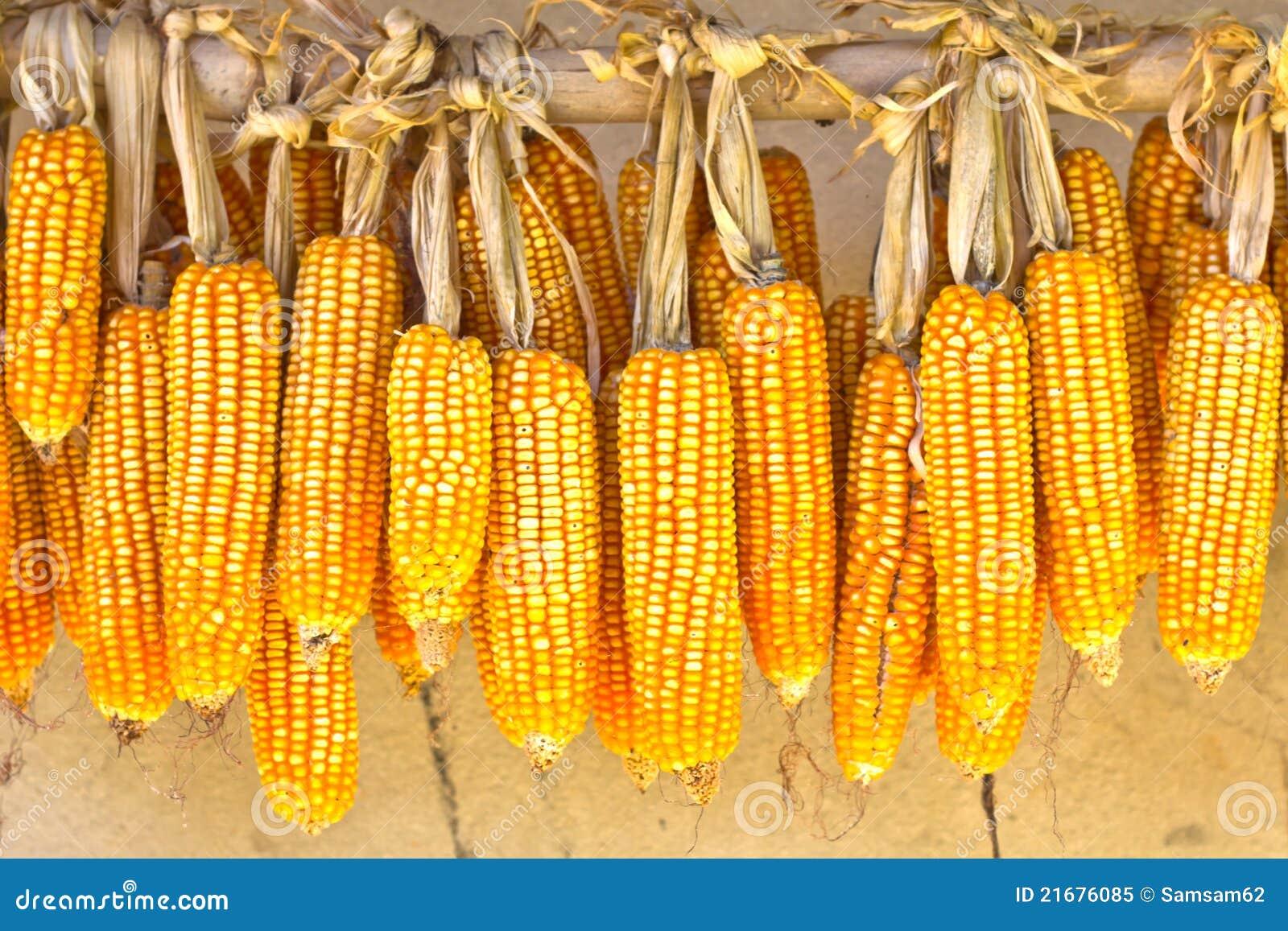 干_干的玉米