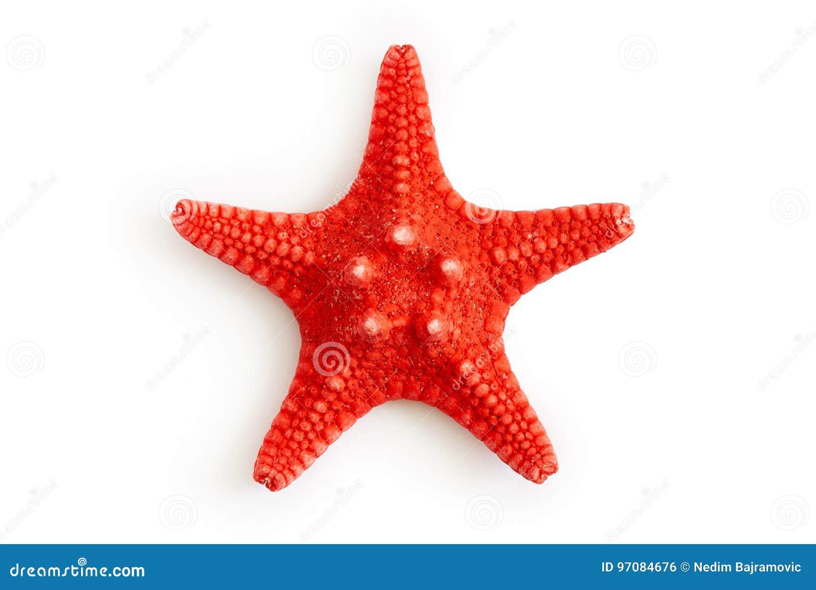 干红海海星