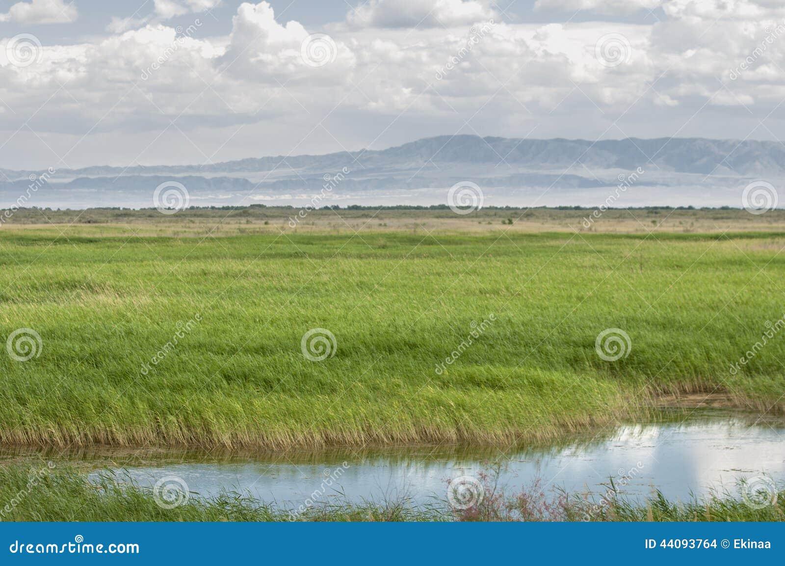 干草原,大草原,草原, veldt