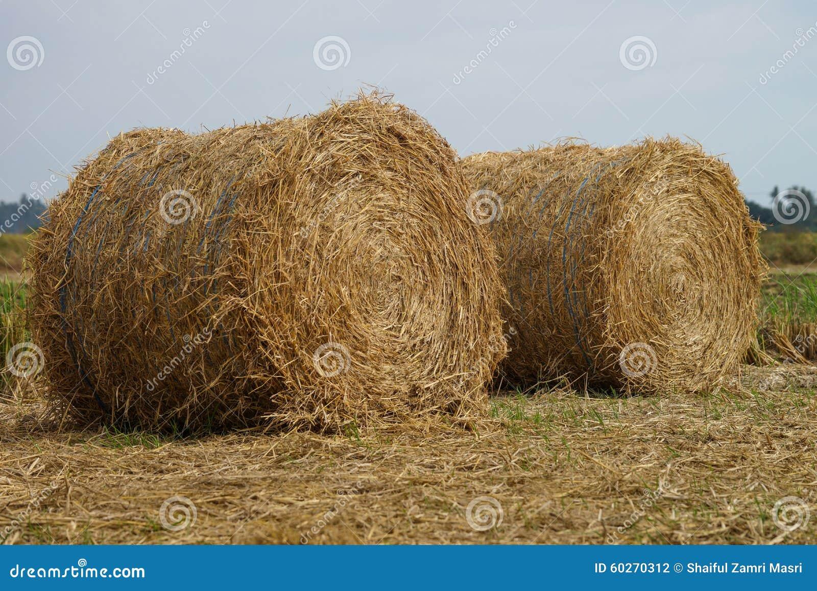 稻干草堆在沙白安南县