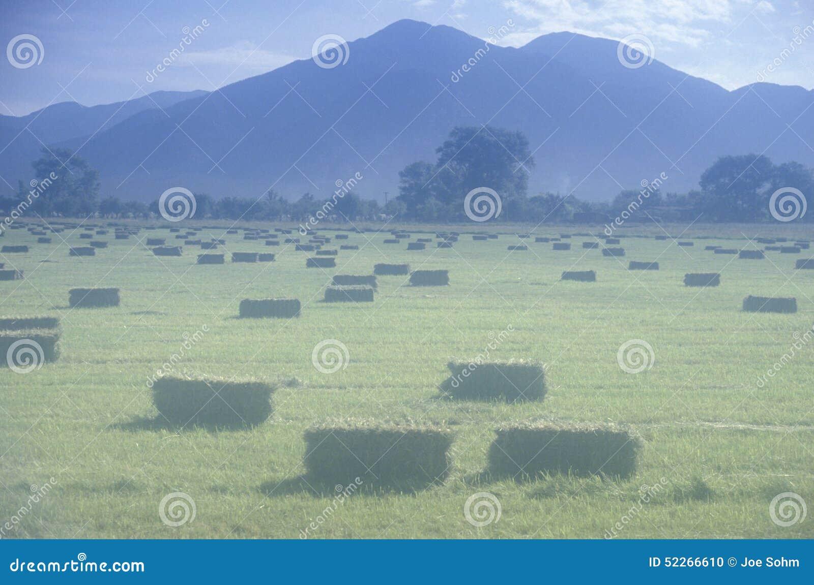 干草堆在NM