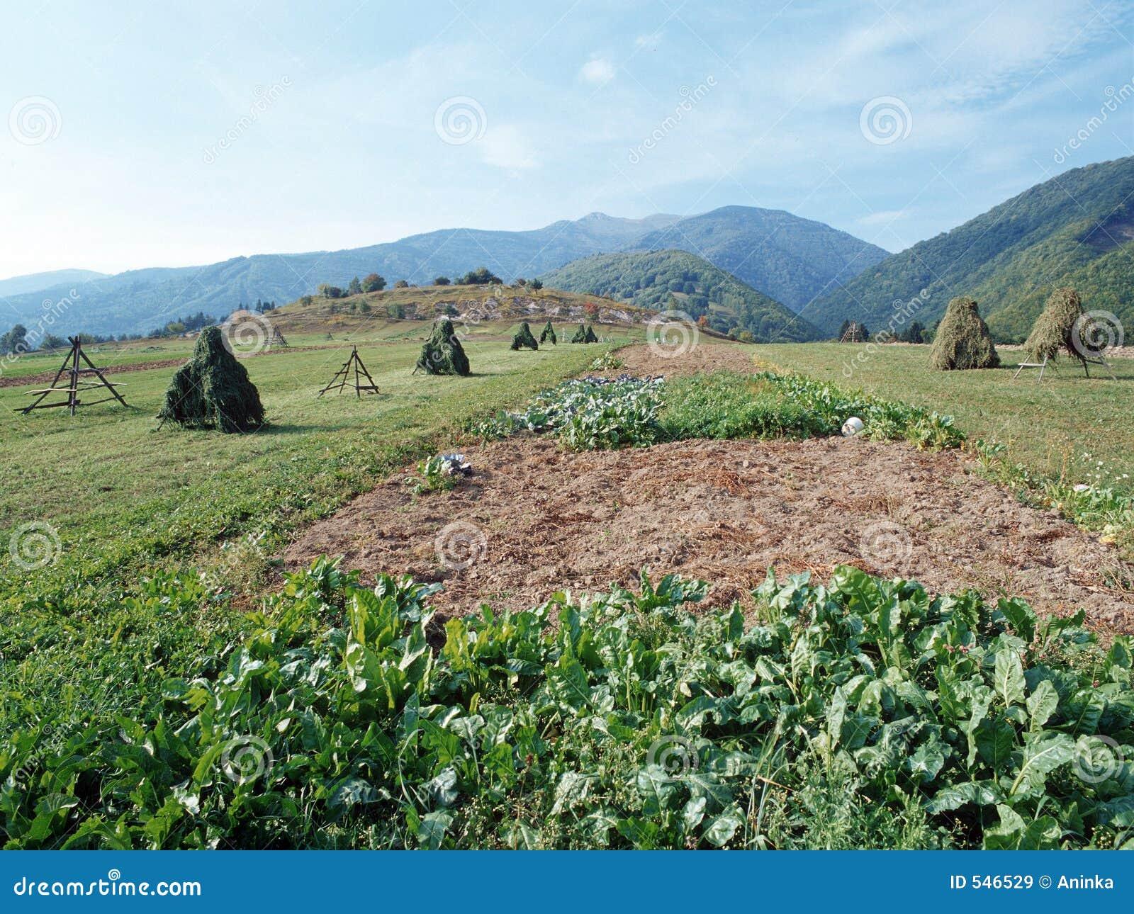 Download 干草堆视图 库存图片. 图片 包括有 混淆, 秸杆, 帐篷, 村庄, 庄稼, 干燥, 麦子, 欧洲, 山腰, 干草 - 546529