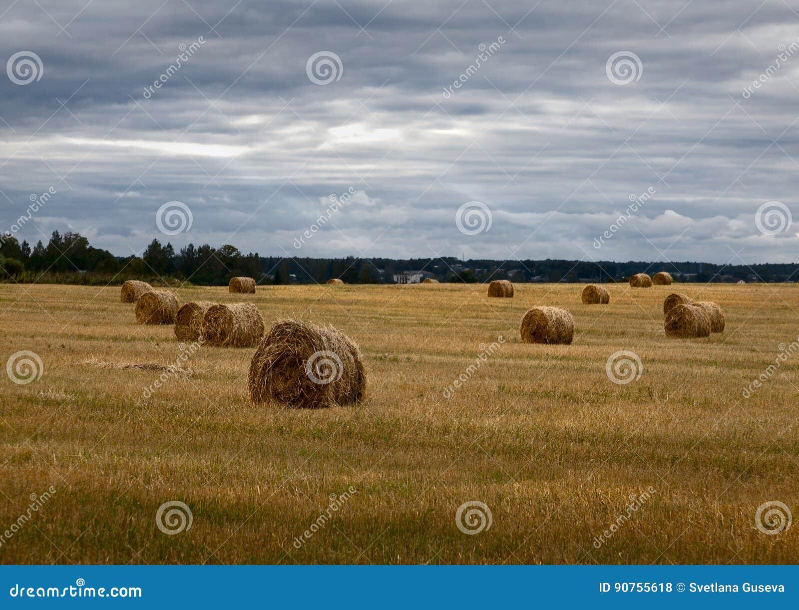 干草堆 俄国域 阴云密布