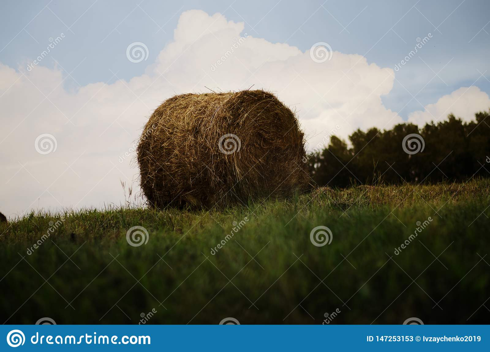 干草捆在草甸 秸杆和大包在领域 乡下自然风景