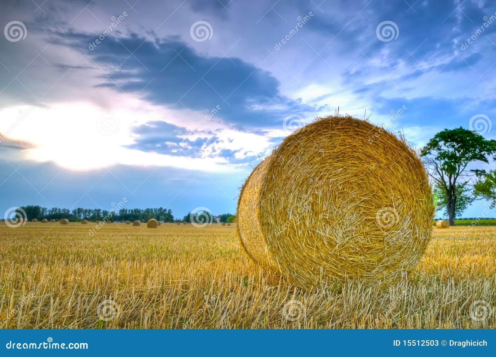 干草横向卷
