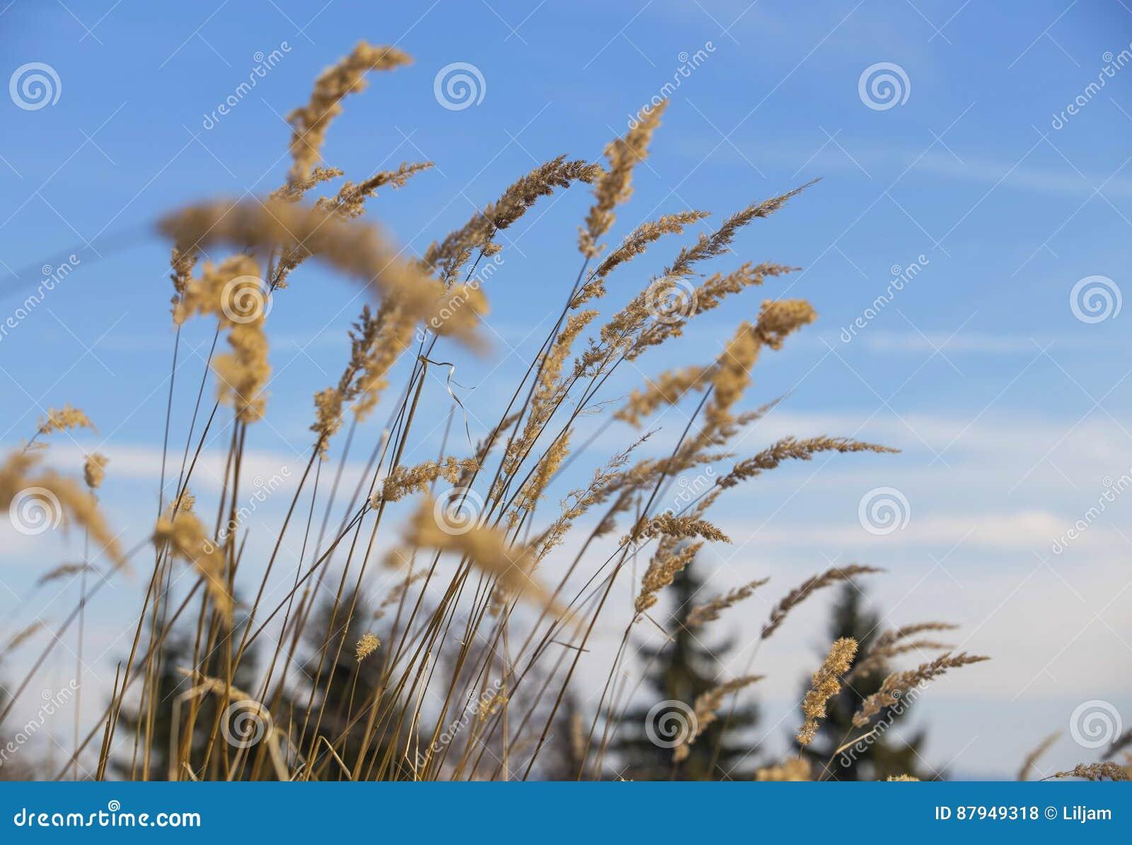 干草花或植物,草甸开花