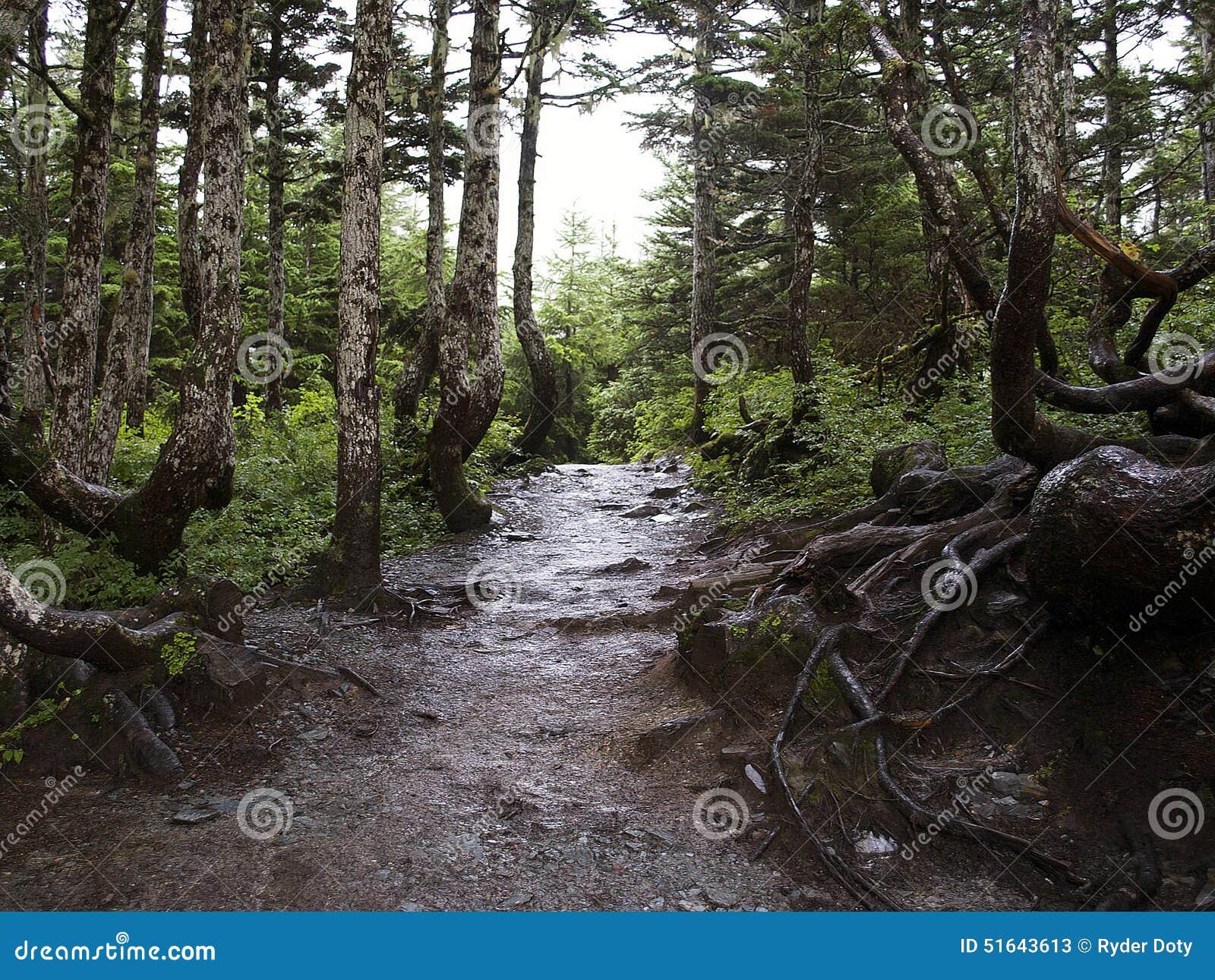 平安的森林山行迹
