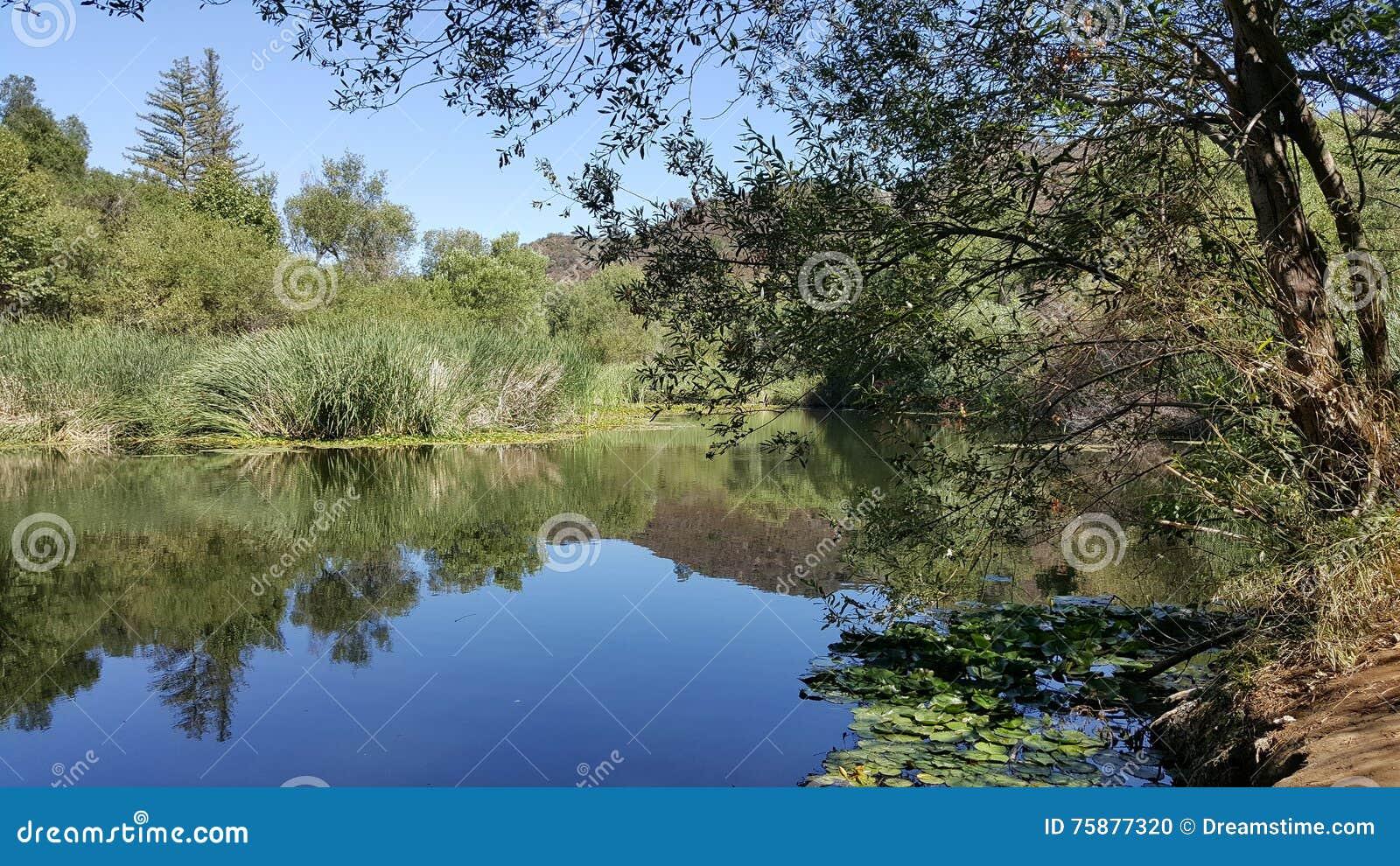 平安的池塘