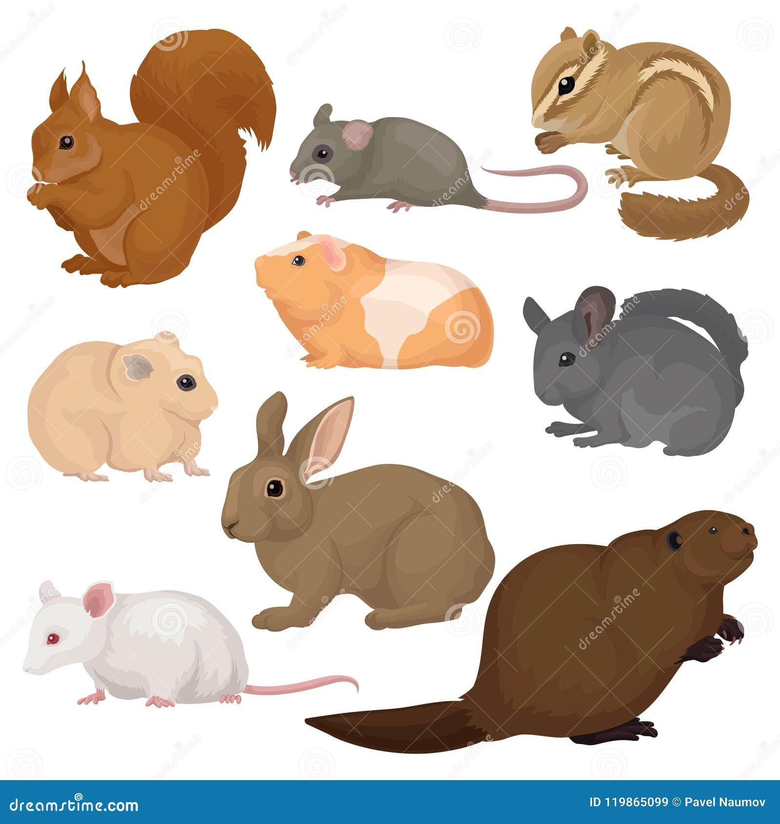 平的传染媒介套各种各样的啮齿目动物 小森林和家畜 哺乳动物的生物 动物区系和野生生物题材