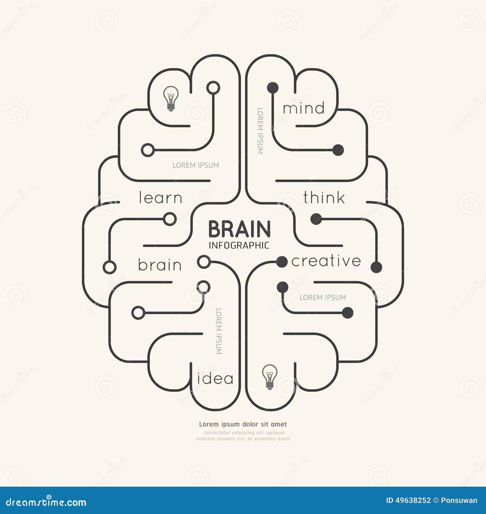 平的线性Infographic教育概述脑子概念 向量