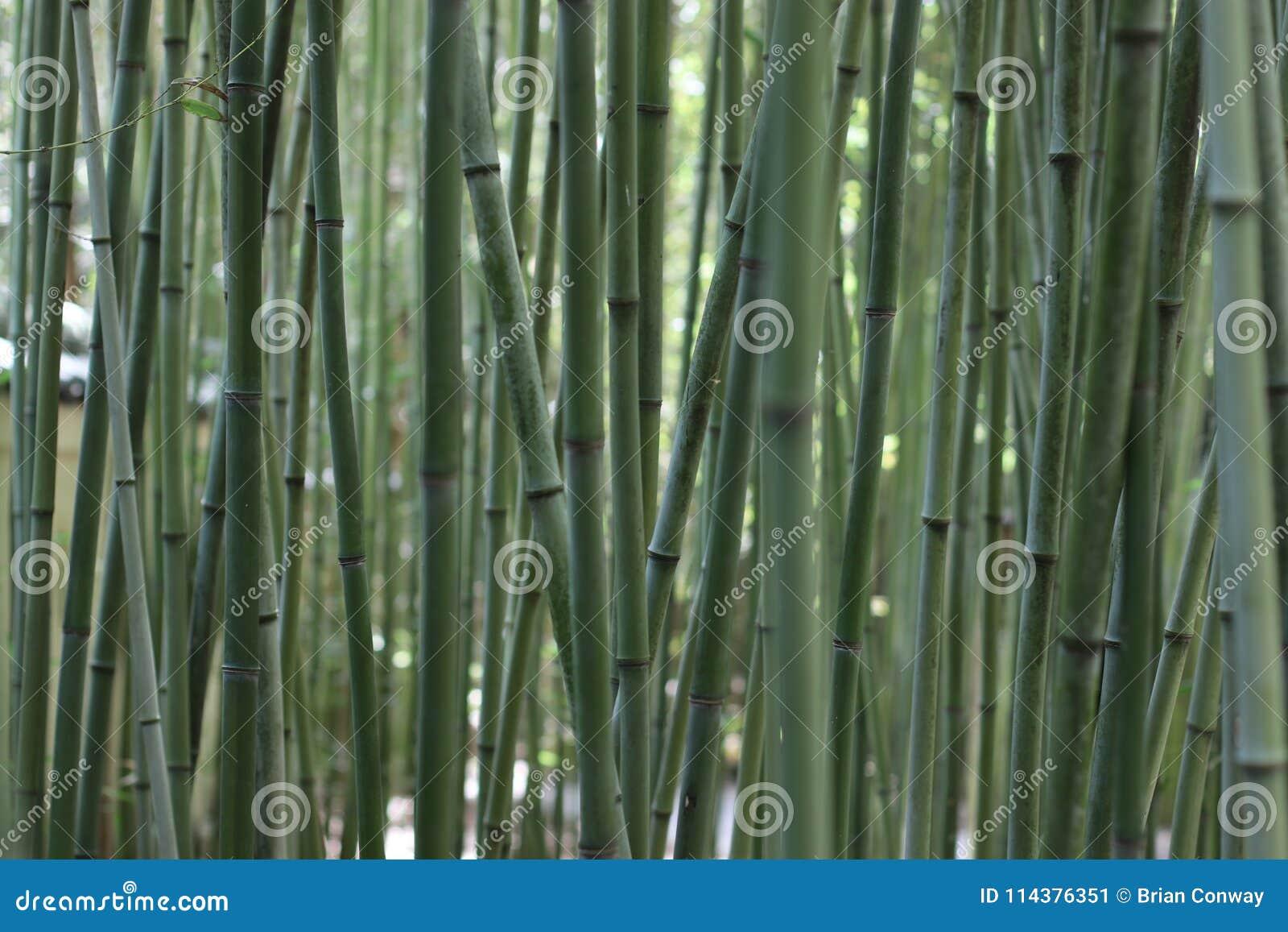 平静的竹子在日本庭院里