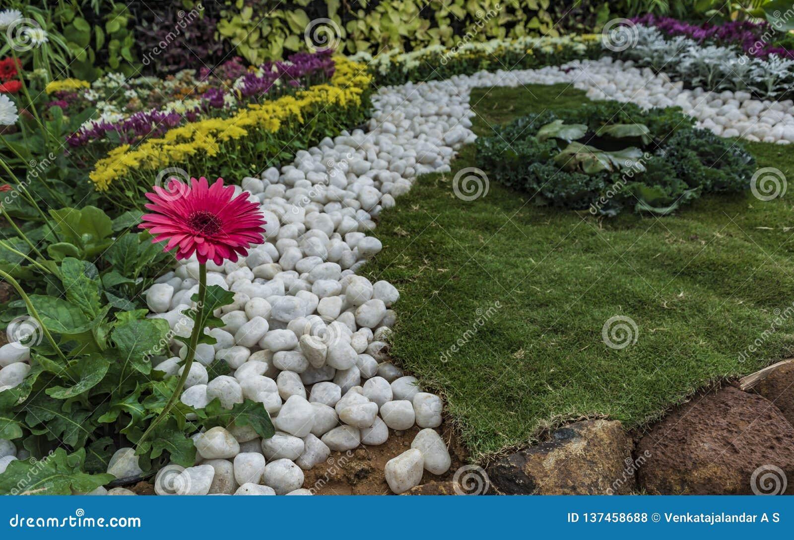 平静:家庭菜园-白色小卵石、草坪和红色雏菊花