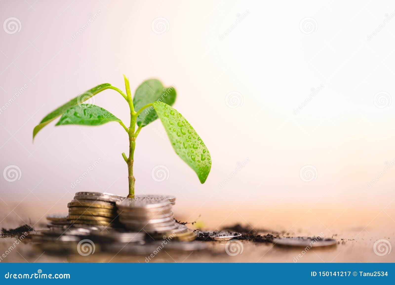 年幼植物增长,并且硬币堆积