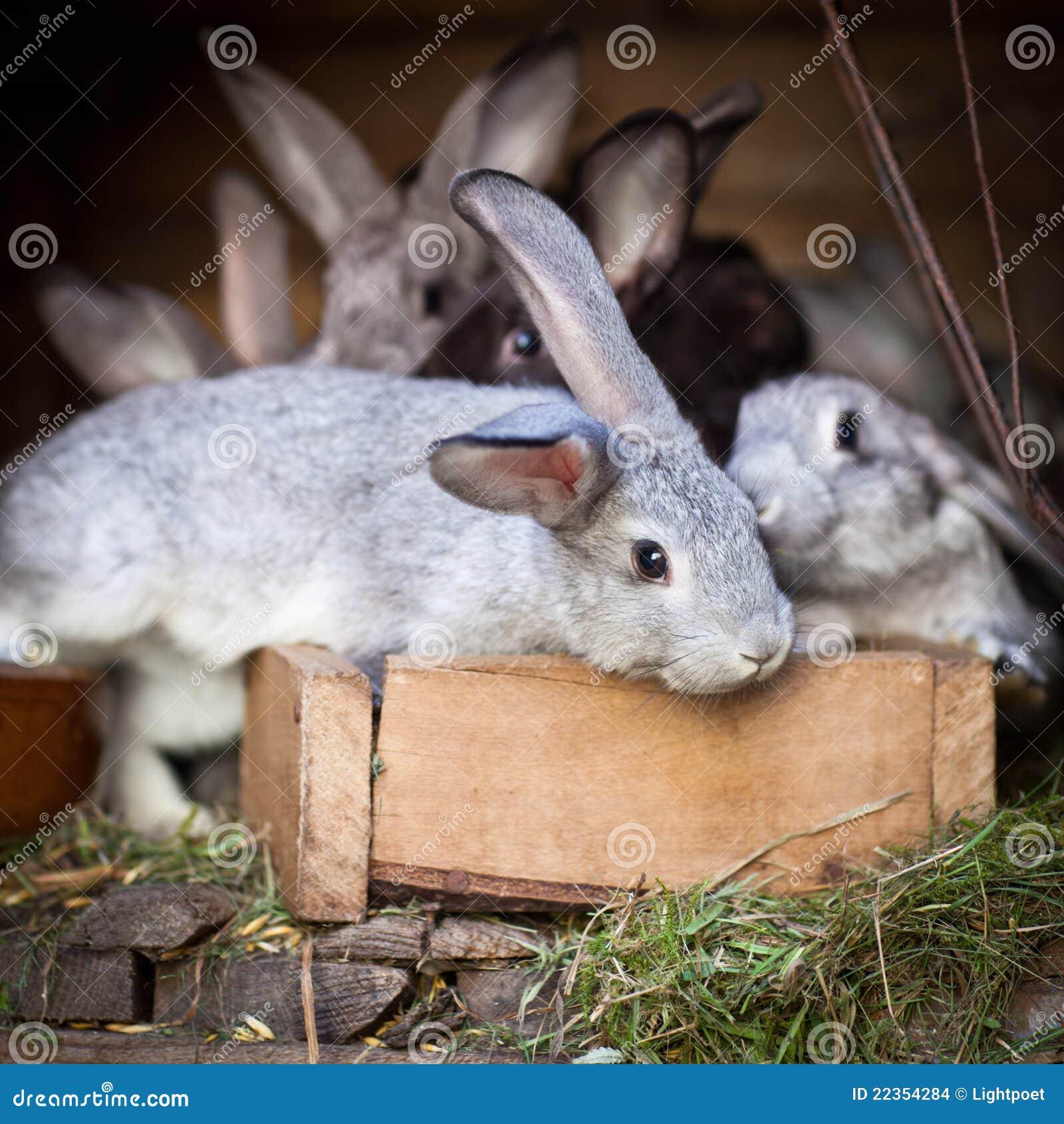 幼小兔子弹出在储藏箱外面