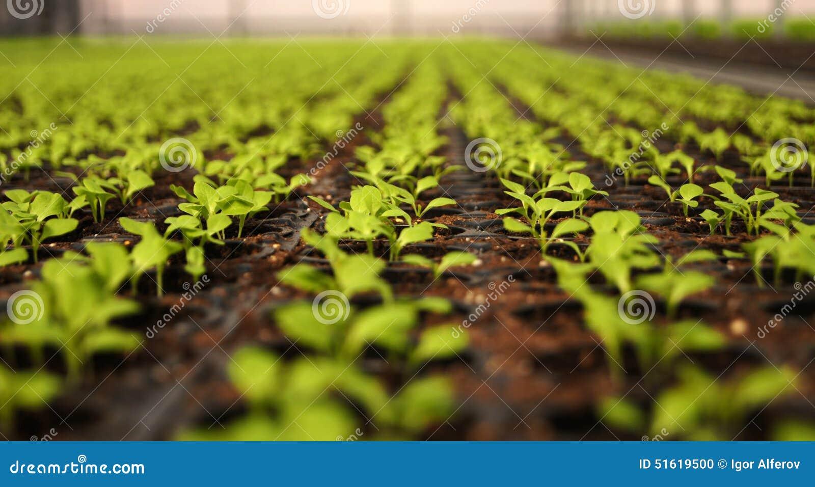幼木自温室 沙拉