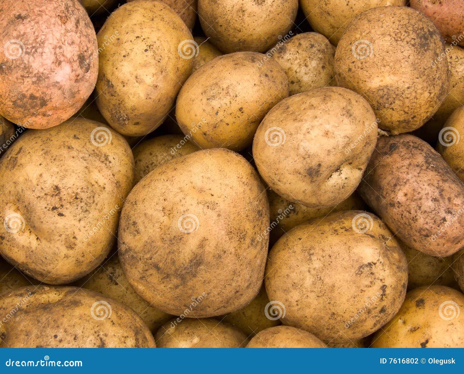 庄稼土豆肿胀