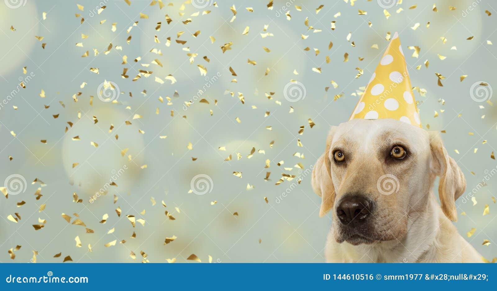 庆祝生日宴会的狗,戴一个黄色圆点帽子 隔绝反对与五彩纸屑落的淡色蓝色背景